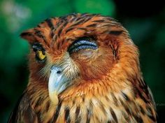 "* * OWL: "" Betcha didn'ts knowz dat peoples realities be de result of der perceptions."""