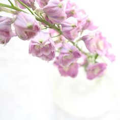 58 Likes, 4 Comments - Flowers Peet Lilac Flowers, Petra, Instagram Accounts, Dwarf Lilac
