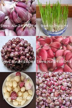 [Visit to Buy] 200pcs Mini Garlic Seeds Red Healthy Green Vegetable Bonsai Seeds Plant Decoration Very Easy Grow Home & Garden For Medicine #Advertisement