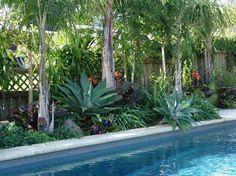 Subtropical pool landscaping gardening-sub-tropical. Subtropical pool landscaping gardening-sub-tropical. Planters Around Pool, Landscaping Around Pool, Tropical Pool Landscaping, Tropical Backyard, Backyard Landscaping, Landscaping Ideas, Oasis Backyard, Tropical Gardens, Landscaping Software