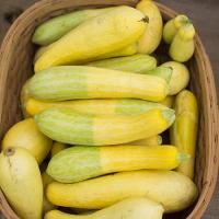 From flowers to peppers to squash to blueberries, the Matthews Farmers' Market is as much a feast for the eyes and nose as it is for the stomach. #Matthews