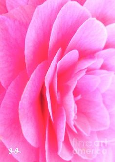 Passion Pink by Geri Glavis