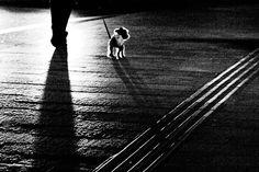 dog's back | Flickr - Photo Sharing!