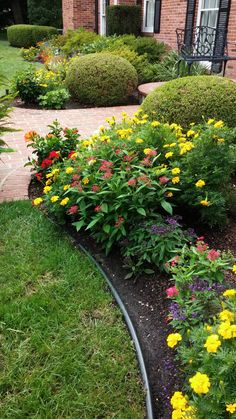 An attractive front garden - Evergreens and perennial shrubs grow along the back of this deep bed, while a colorful array of annuals provides season-long color in the front