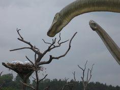 Dino's in Łeba!!