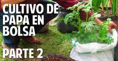 Cosas del Jardin: Parte 2 - Como Cultivar papa en el Balcón - Patata en Bolsa