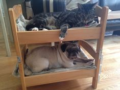 Can a dog and a cat be bunk bed mates? Seems so! - IKEA Hackers ...