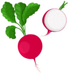 Radish PNG Clip Art in category Vegetables PNG / Clipart - Transparent PNG pictures and vector rasterized Clip art images. Vegetable Cartoon, Flat Drawings, Agriculture Farming, All Fruits, Preschool Learning Activities, Mandala Dots, Learning Arabic, Yoga For Kids, Mosaic Glass