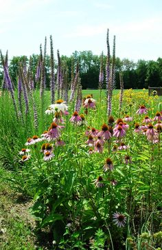 City of Indianapolis - Rain Garden and Native Planting Area Program (with registration form)