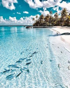 coiour-my-world: Clear Waters of the Maldives   Photo by ...