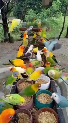 Most Beautiful Birds, Pretty Birds, Beautiful Roses, Animals Beautiful, Funny Birds, Cute Funny Animals, Cute Baby Animals, Cute Animal Videos, Funny Animal Pictures