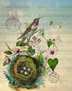 Botanical Print Hummingbird with Nest