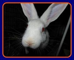 Hooray for Gator!! #bunnies #animalrescue #adoptdontshop