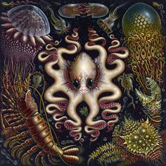 Robert Connet - Sea Fauna