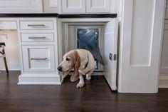 Looking for stylish dog door ideas? Check out over 25 stylish dog door installs & designs right here. The best dog door ideas around ; Animal Room, White Shaker Cabinet Doors, Best Dog Door, Pet Door, Doggy Doors, Door With Dog Door, Dog Spaces, Dog Wash, Dog Rooms