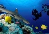 Australia has been asked to create a park that would protect sea animals.