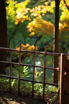Shin Edogawa Park, Tokyo, Japan. Bamboo fence. Would be perfect to keep the dogs out of my backyard flower beds