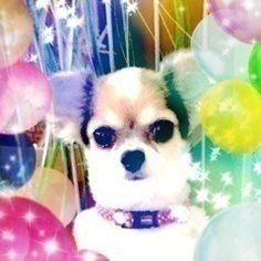 Helloweenだよーーー * 290 | 乃木坂46 深川麻衣 公式ブログ Photo Book, Dogs, Animals, Animales, Animaux, Doggies, Animais, Dog, Animal