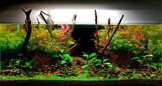 Aquarium Design Group - A Planted Aquarium Expressing Fall Colors