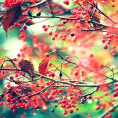 Autumn berries love