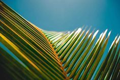 Palm Leave photo by Jakob Owens