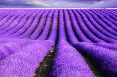The Purple Village Lavender Fields Provence, France [13 Pictures] | Most Beautiful Pages
