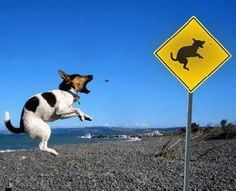 Dog doesn't ike his picture on sign board!! So funny!