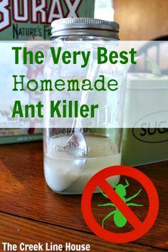 The Very Best Homemade DIY Ant Killer