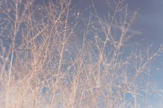 FINE ART PHOTOGRAPHY Tree Branches Stems Winter by FormatCo