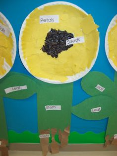 Chalk Talk: A Kindergarten Blog: Growing Things and Parts of a Plant