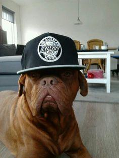 Funny bordeaux dog