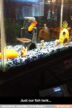 #Spongebobaquarium