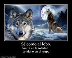Sé como el lobo. Fuerte en la soledad... solidario en el grupo