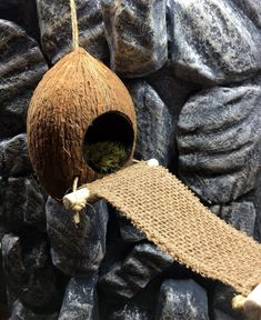 Excited to share this item from my shop: Hide With Bridge Carved Coconut Hide / Cave with Burlap Bridge and Drum Wood Barrel Beads Terrariums Gecko, Leopard Gecko Terrarium, Terrarium Reptile, Gecko Vivarium, Leopard Gecko Habitat, Crested Gecko Habitat, Lizard Habitat, Reptile Habitat, Reptile Cage