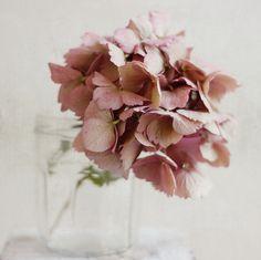 Kyla Gold Dusty Rose Wedding Color Inspiration | Fleurs Foncées ❈ dark art photography flowers  botanical prints - hydrangea
