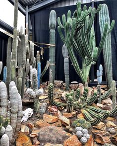 Crazy cool set up at Collectors Corner in Melbourne, Australia 🇦🇺 #cactus #cactuslove #succulent #succulove #desert #plant #nature #leafandclay #jungalowstyle #succulents #flower #flowerlove #garden #plants #instagood #photoftheday #picoftheday #instalike #beautiful #green #cactusrepost #bestoftheday #cactusmovement #cactusclub #cacti #urbanjunglebloggers #love