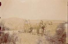 Photograph of Cupeno Indians, circa 1902. Handwritten caption on verso: WARNER'S RANCH, CALIF. Subjects: Warner's Ranch, California Indians, Cupeno, horses, wagons