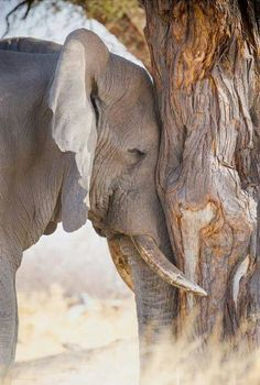 elephant by wildlife photographer Annabelle Venter Elephant Pictures, Elephants Photos, Save The Elephants, Animal Pictures, Elephant Photography, Wildlife Photography, Animal Photography, Wild Life, Cute Baby Animals