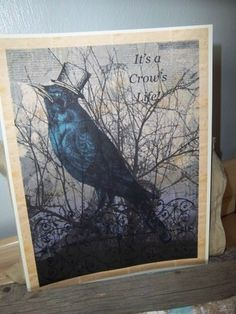 Crows Life