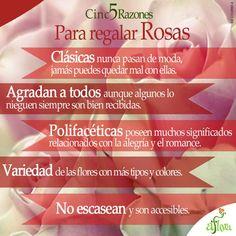 5 razones para regalar Rosas en cualquier momento.