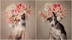 A Photographer Dressed These Shelter Dogs Up In Unique Outfits Hoping To Find Their Forever Homes – AngusPost