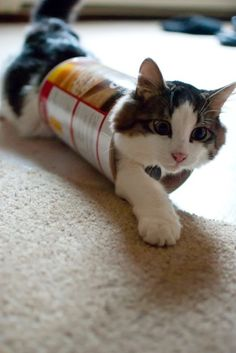 A tube of cat natures anti depressant