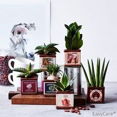 Succulent mix in quirky retro chocolate tins- ideal gift - best4garden.co.uk Ltd Cool Gifts For Women, Gifts For Mum, Mint Herb, Best Christmas Presents, Succulent Gifts, Unique Presents, House Plants, Succulents, Best Gifts