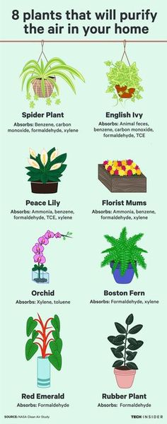 These eight plants will purify the air in your home so you can live a healthier life.