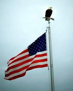 Eagle sitting on a flag pole