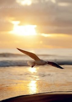 It was morning, and the new sun sparkled gold across the ripples of a gentle sea.~ Richard Bach, Jonathan Livingston Seagull