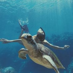 // GREEN SEA TURTLE // GYPSEA LUST //