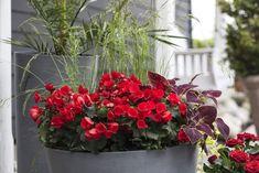 Disse 7 plantene tåler fint å stå i skyggen | Stelletips fra Mester Grønn Garden Inspiration, Plants, Terrace, Summer, Flora, Plant, Planting