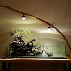 Control Over Your Aquarium! - Control Over Your Aquarium! Control Over Your Aquarium! Aquarium Terrarium, Glass Aquarium, Aquarium Lighting, Aquarium Design, Planted Aquarium, Aquarium Fish, Nano Aquarium, Vivarium, Paludarium