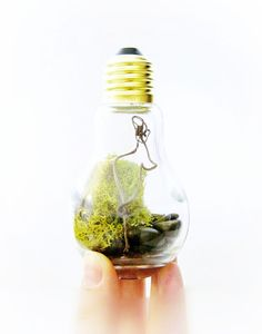 Light Bulb Terrarium Planter: For Someone Who Has Everything Terrarium Jar with Chartreuse Lichen & Moss - DIY Terrarium Kit. $16.00, via Etsy.